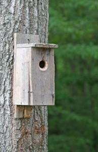 86321-birdhouse-on-tree
